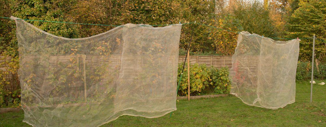 drying nets