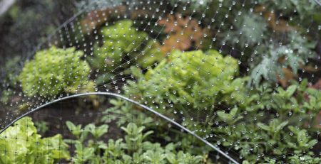 netting covering plants